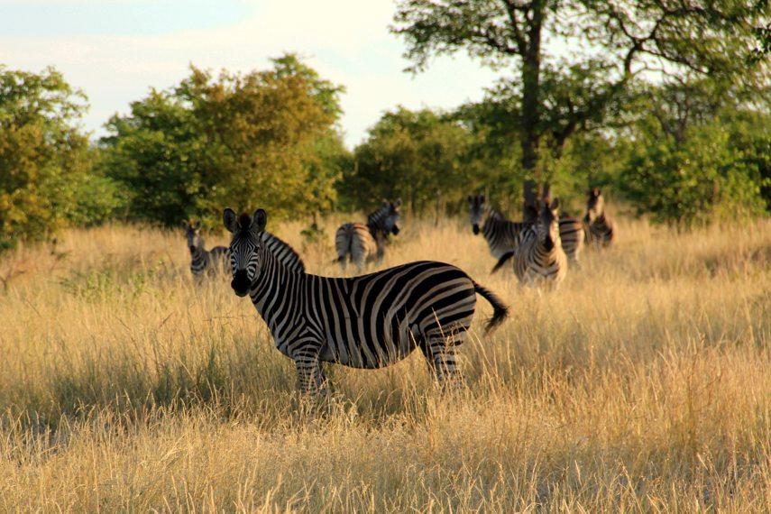 o que fazer na africa do sul
