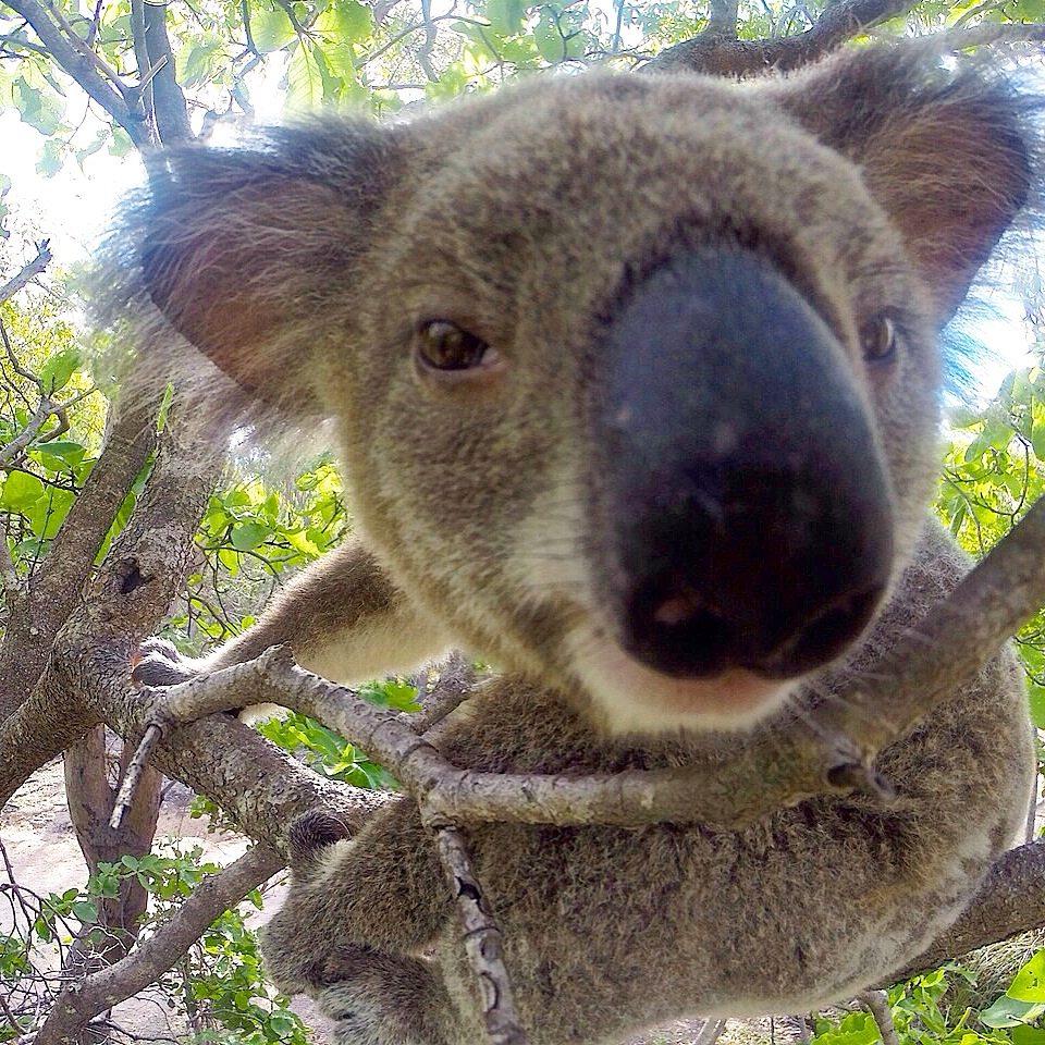 o que fazer em magnetic island na australia