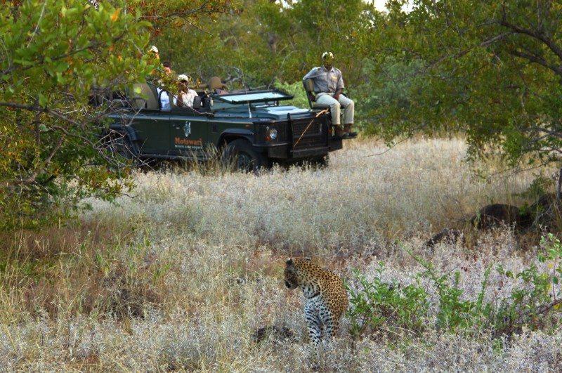 safári Kruger National Park