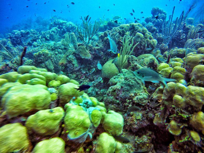 corais de san andres