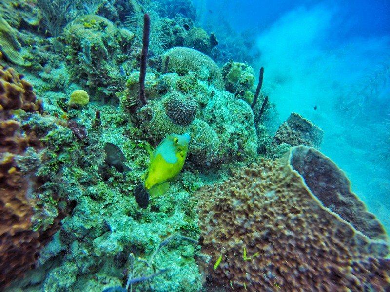 corais san andres colombia