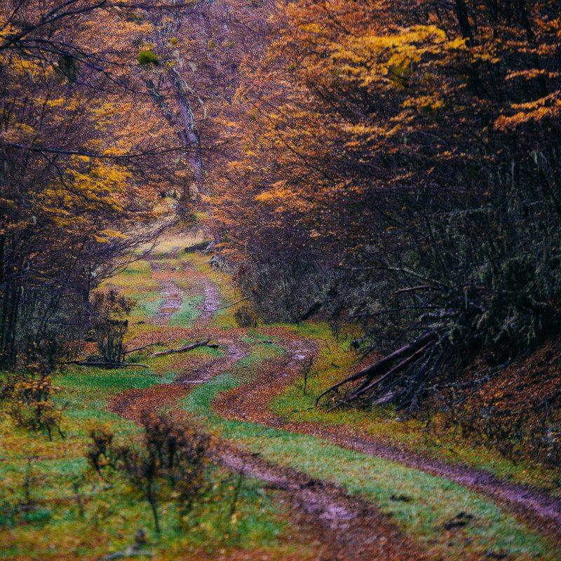 caminho entre árvores com folhas de outono
