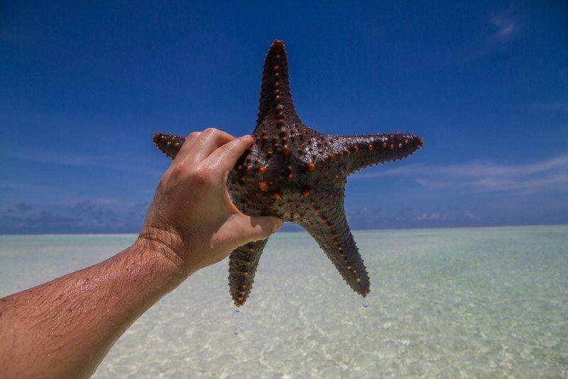 estrela do mar da ilha africana zanzibar