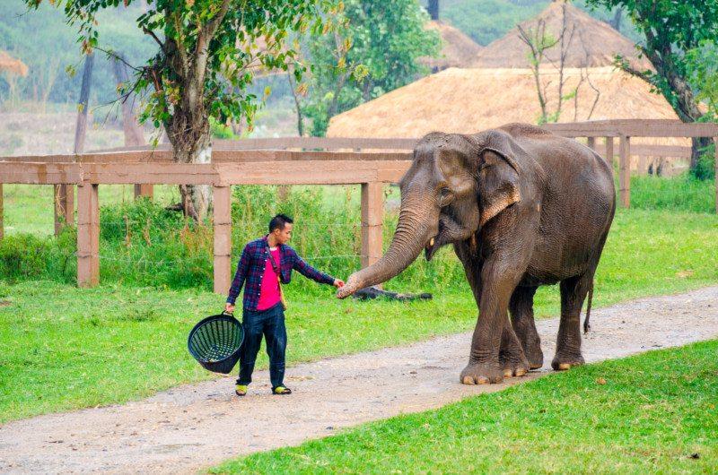 passeio de elefante no sudeste asiático