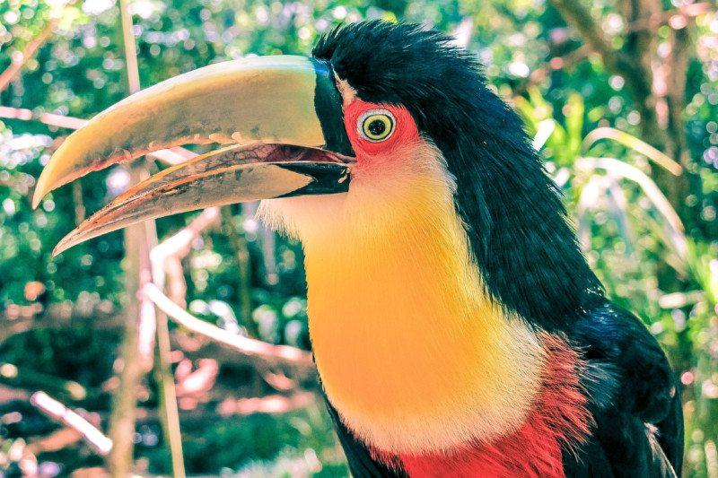 passeios em foz do iguaçu Foto: Patricia Schussel