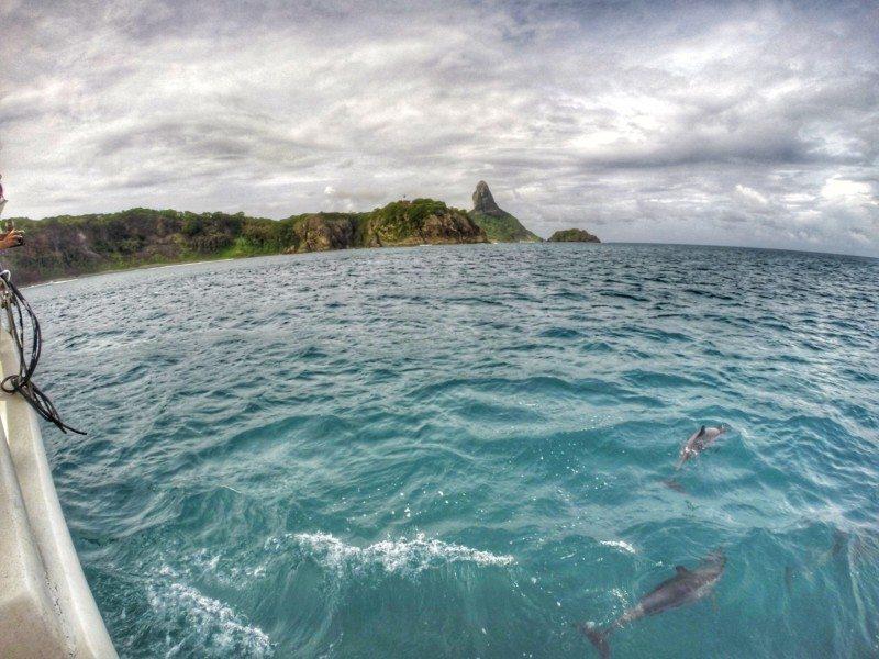 Golfinhos no mar em fernando de noronha