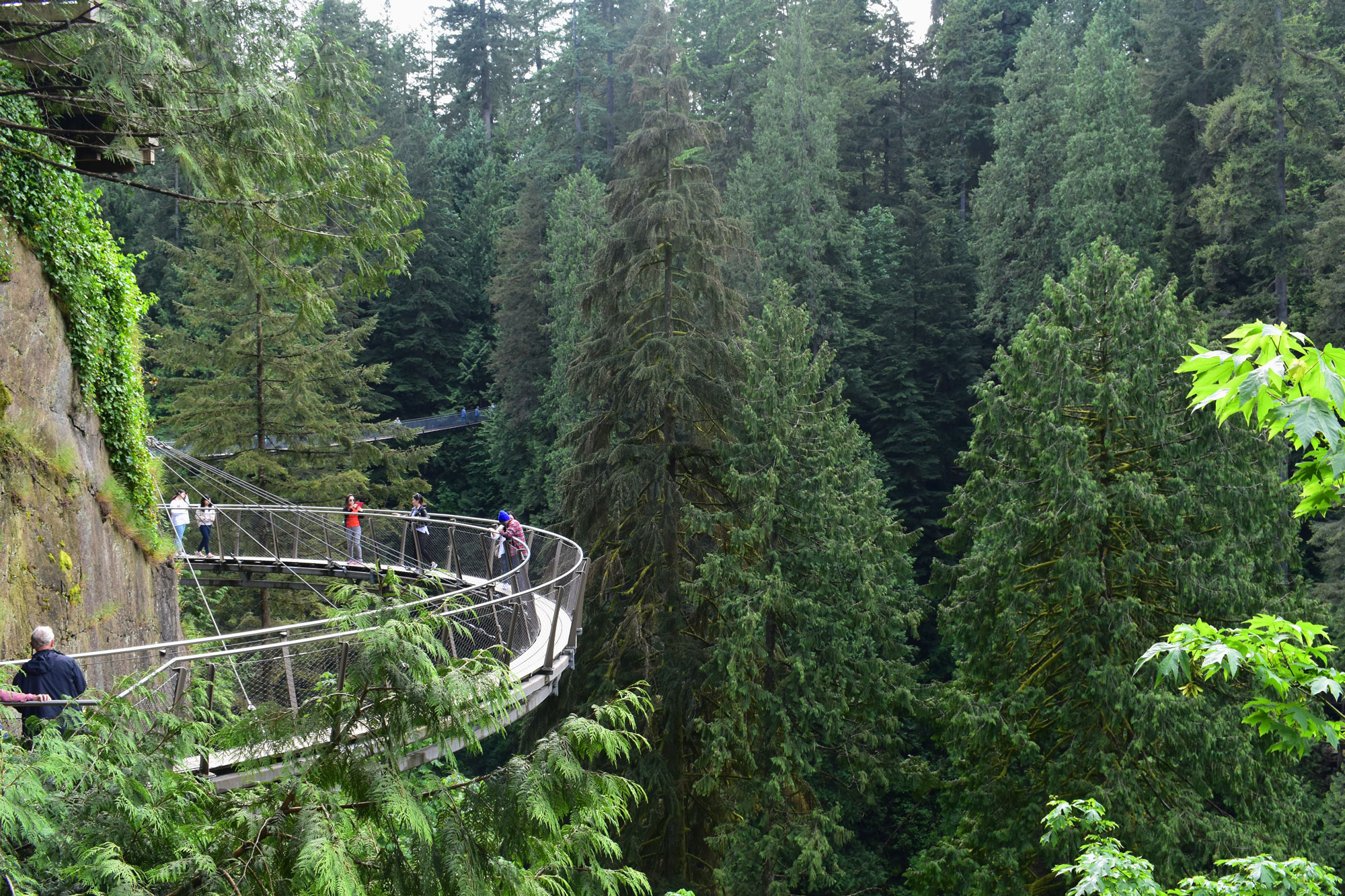 Capilano Suspension Bridge Park, Vancouver, BC. Canadá Foto: Virginia Falanghe