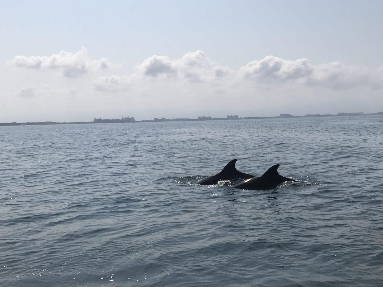o que fazer em puerto vallarta e riviera nayarit no méxico Foto: Patricia Schussel