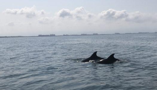 O que fazer em Puerto Vallarta e Riviera Nayarit