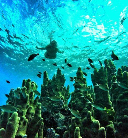 Corais do mar de San Andrés, com mergulhadora ao fundo.