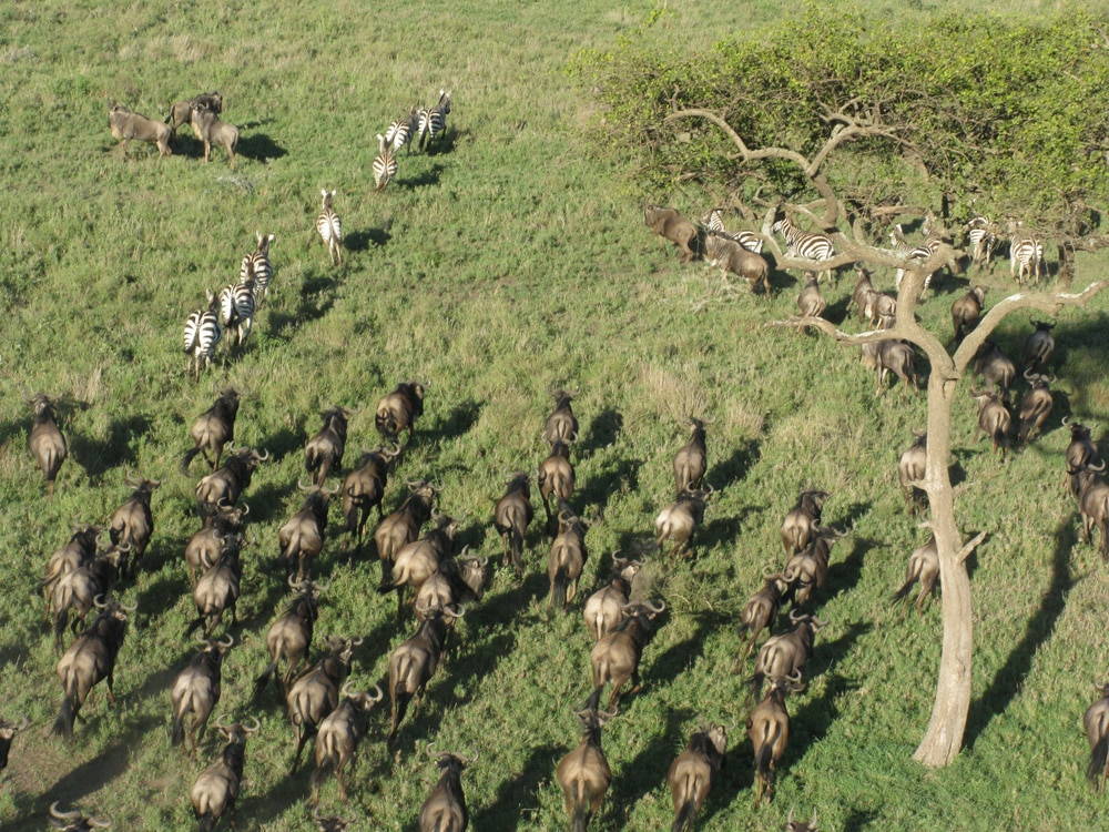 Vista durante o Voo de Balão no Safari do Serengeti