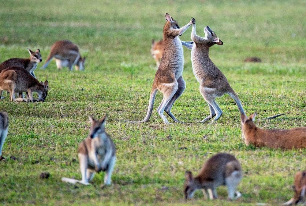 Vai pra Austrália? Não esqueça do seu seguro viagem saude internacional