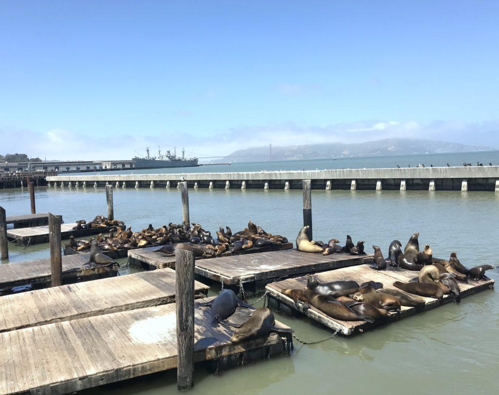 O que fazer em San Francisco California - Pier 39