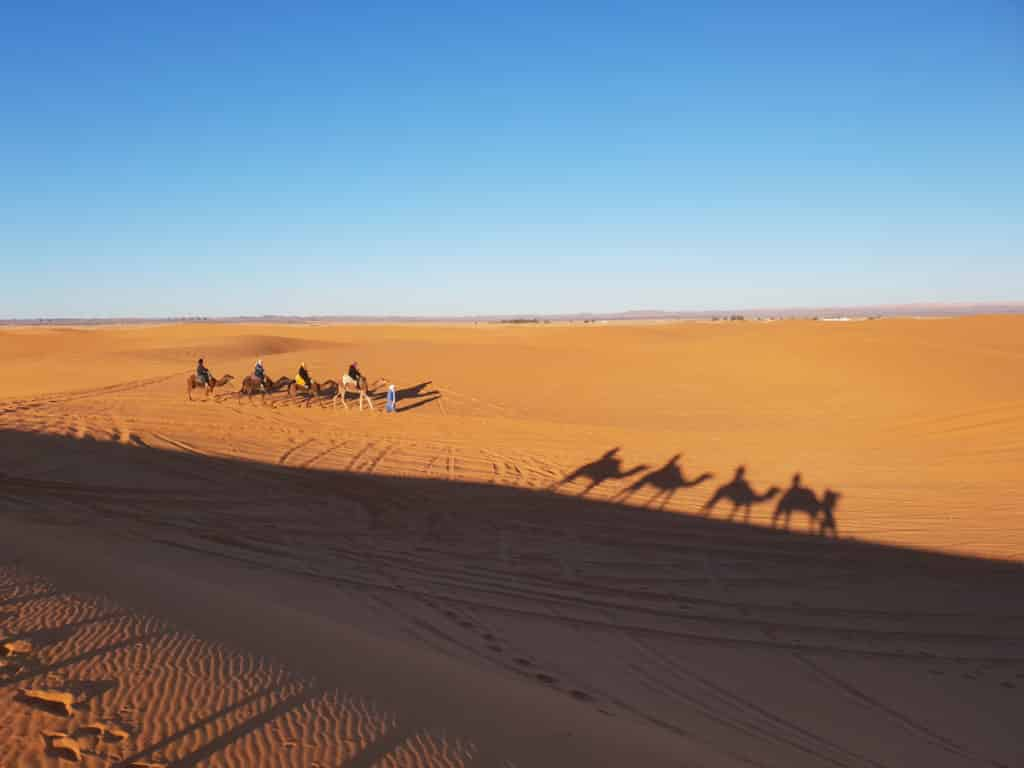 Saara Dromedários em Marrakech, Marrocos