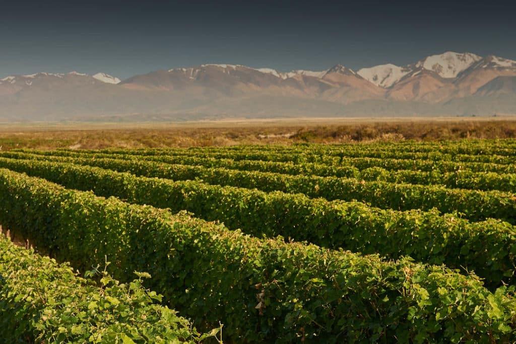 Vista da vinícola Chandon em Luján de Cuyo. Foto do site oficial da Chandon.