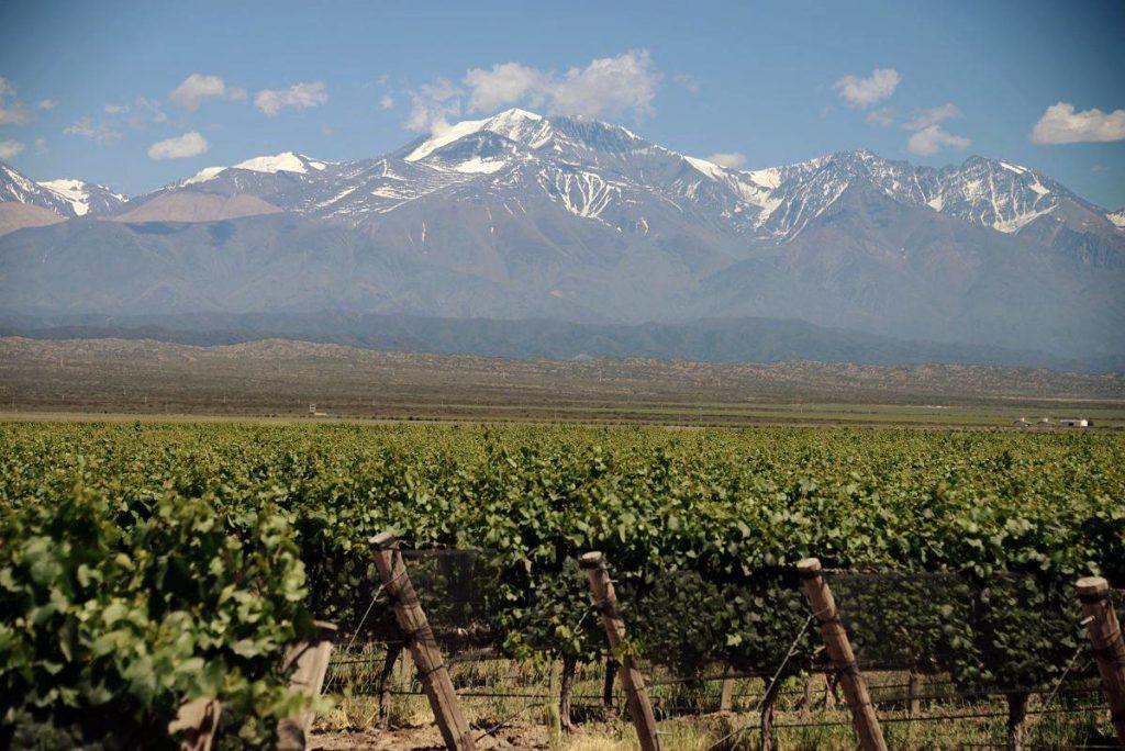 Vista de vínicola argentina em Mendoza, com a Cordilheira dos Andes ao fundo. Foto de @pulentaestate via Facebook.