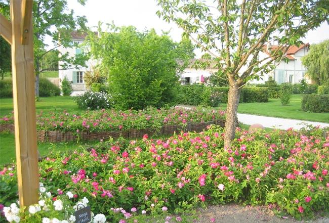 Jardim de Rosas - Foto: http://www.roseraie-provins.com - Provins