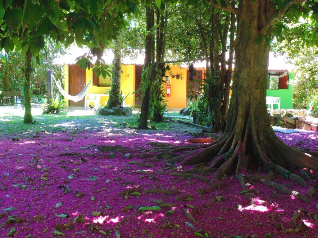 Arvores com flores na Pousada Sitio das Flores