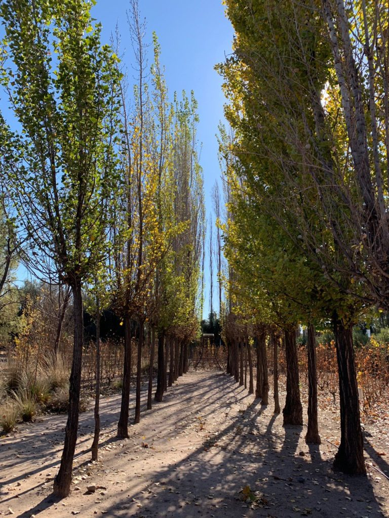 Árvores em caminho do hotel. Foto de Bruno Tavares