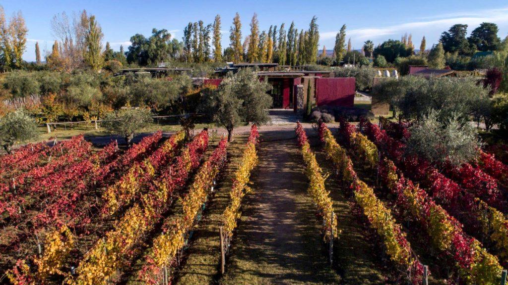 Vista da bodega El Enemigo no Outono, com vinhedos na frente da casa, e folhagem nas cores típicas da estação (vermelhas e amarelas). Foto da página oficial El Enemigo no Facebook. Vinicola Mendoza