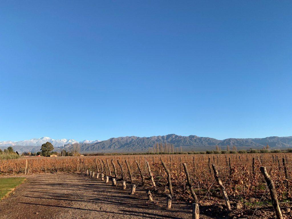 Vista dos vinhedos secos em clima de Outono, com céu azul limpo e Cordilheira dos Andes ao fundo. Foto de Bruno Tavares.