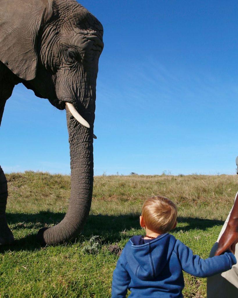 Já imaginou proporcionar essa experiência para seu filho? No Knysna Elephant Park é possível - Foto: @knysnatrunkcall via Instagram