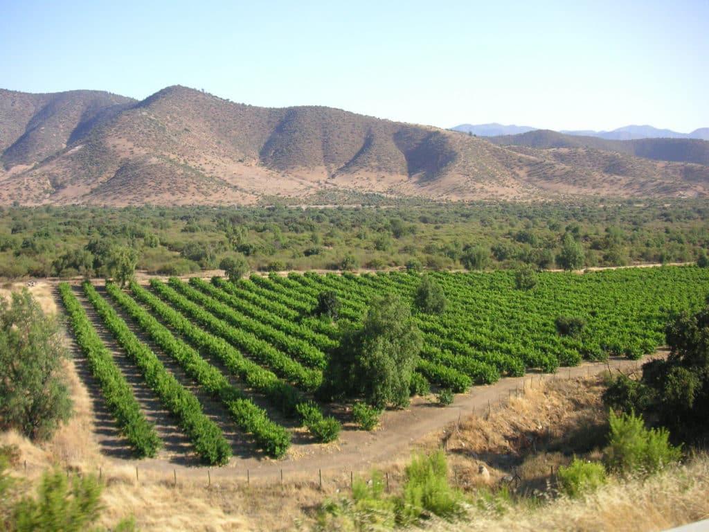 Vista de vinhedos verdes em Mendoza, Argentina, com montanhar ao fundo. Foto de Beatrice Murch via Flickr.