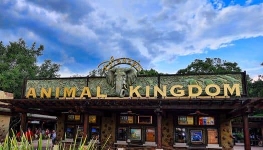 Animal Kingdom – Dicas para Você Aproveitar ao Máximo o Parque