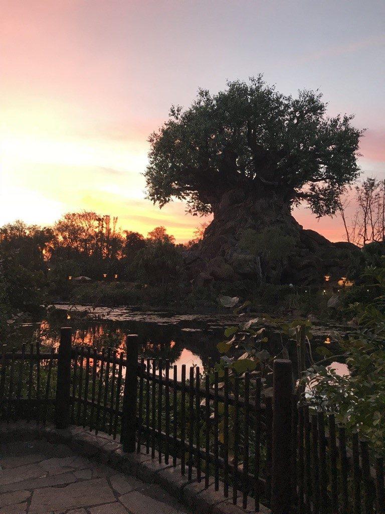 A Tree of Life com o nascer do sol - imagem linda!