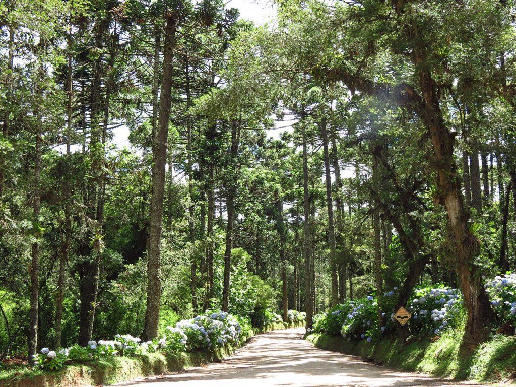 Vista de caminho de terra na entrada do Horto Florestal de Campos do Jordão, com árvores e flores.