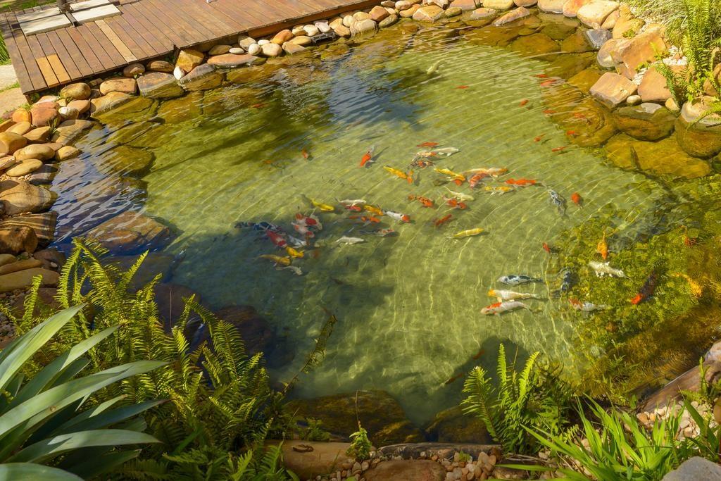 Lago com peixinhos na Pousada dos Pireneus