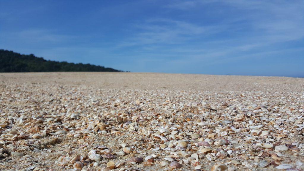 Vista de chão de areia repleto de conchinhas em praia de Ubatuba