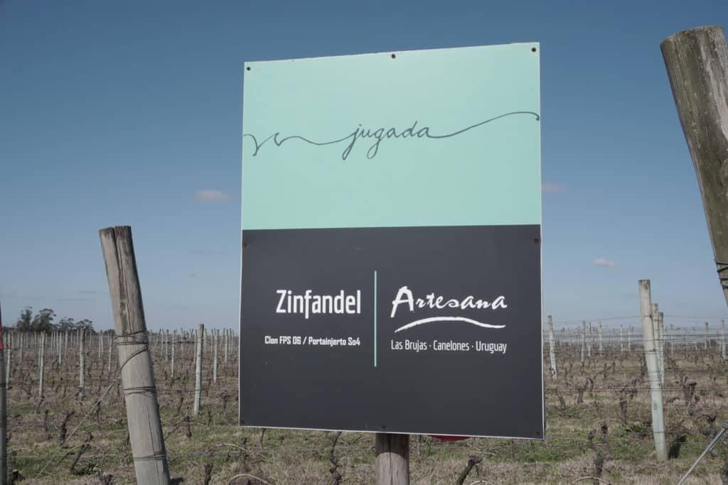 A uva Zinfandel, uma das especialidades da Bodega Artesana