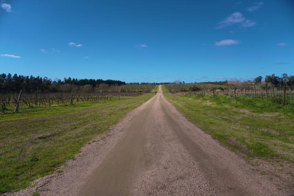 A entrada da vinícola Juanicó e Familia Deicas