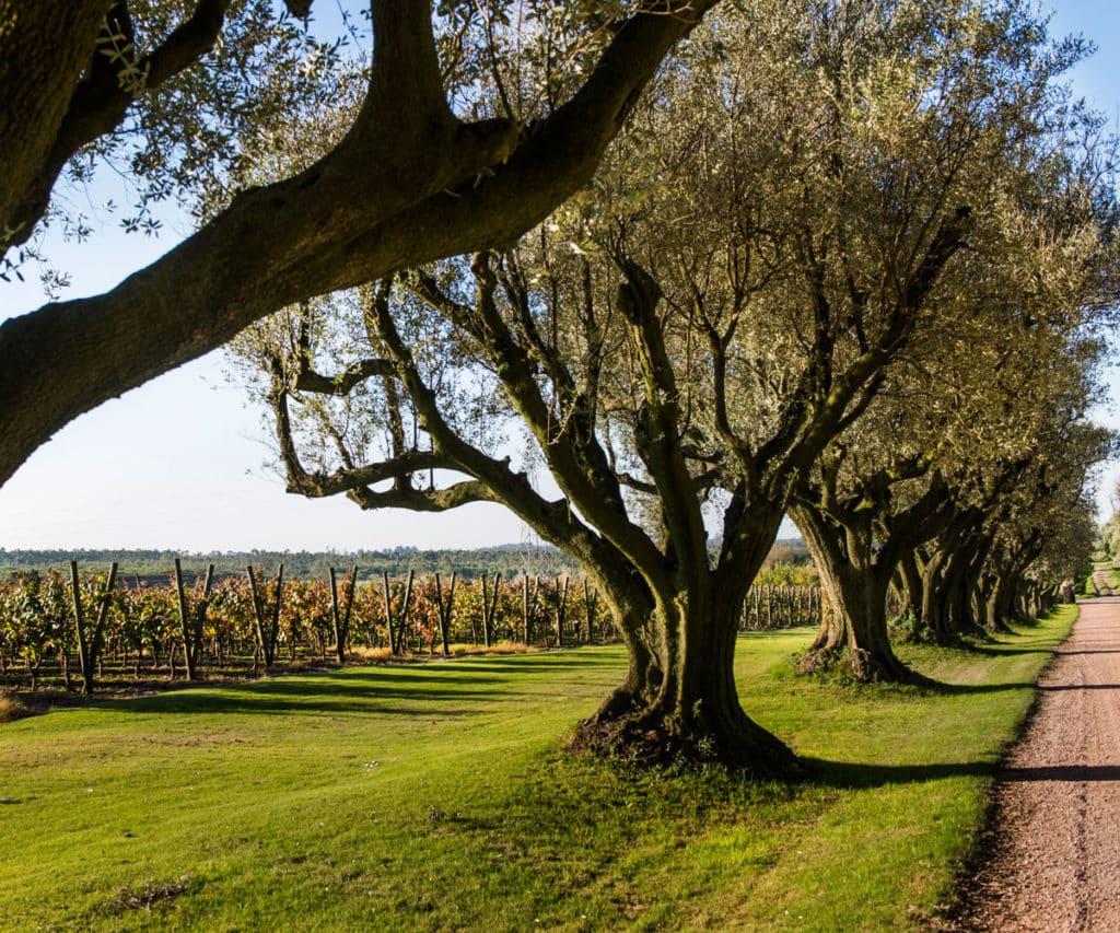 Entrada da Vinícola Viña Varela Zarranz - vinicolas Uruguai