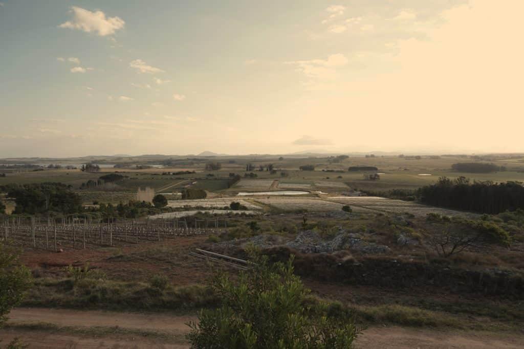 Vista da Vinícola Alto de La Ballena em Punta del Este