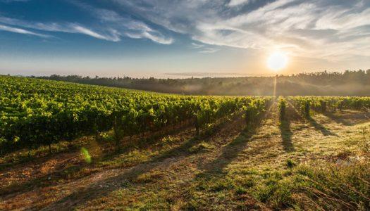 Vinicolas Uruguai – As 13 melhores para colocar no roteiro