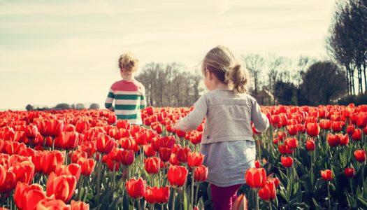 Seguro Viagem Holanda é Necessário? Saiba Tudo Aqui