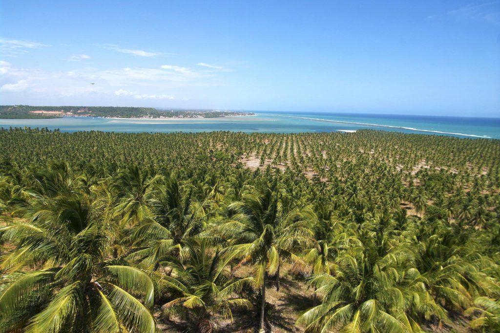 Praia de São Miguel e Praia do Gunga - Foto: Otávio Nogueira via Flickr