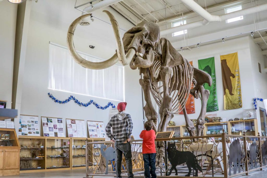 Foto de ossada de mamute exposta em museu do condado de Madera, no Gold Country California