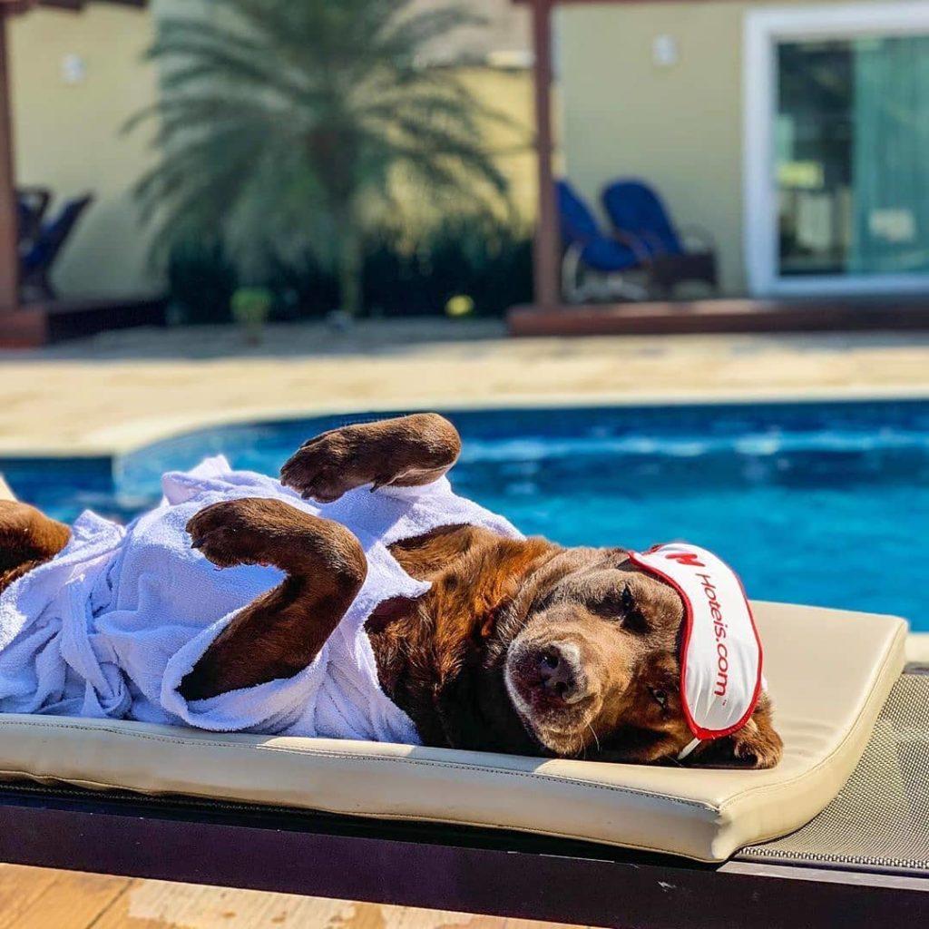 Cachorro marrom deitado de barriga para cima, em frente a uma piscina, com máscara de dormir da Hoteis.com sobre a cabeça, em foto de divulgação.
