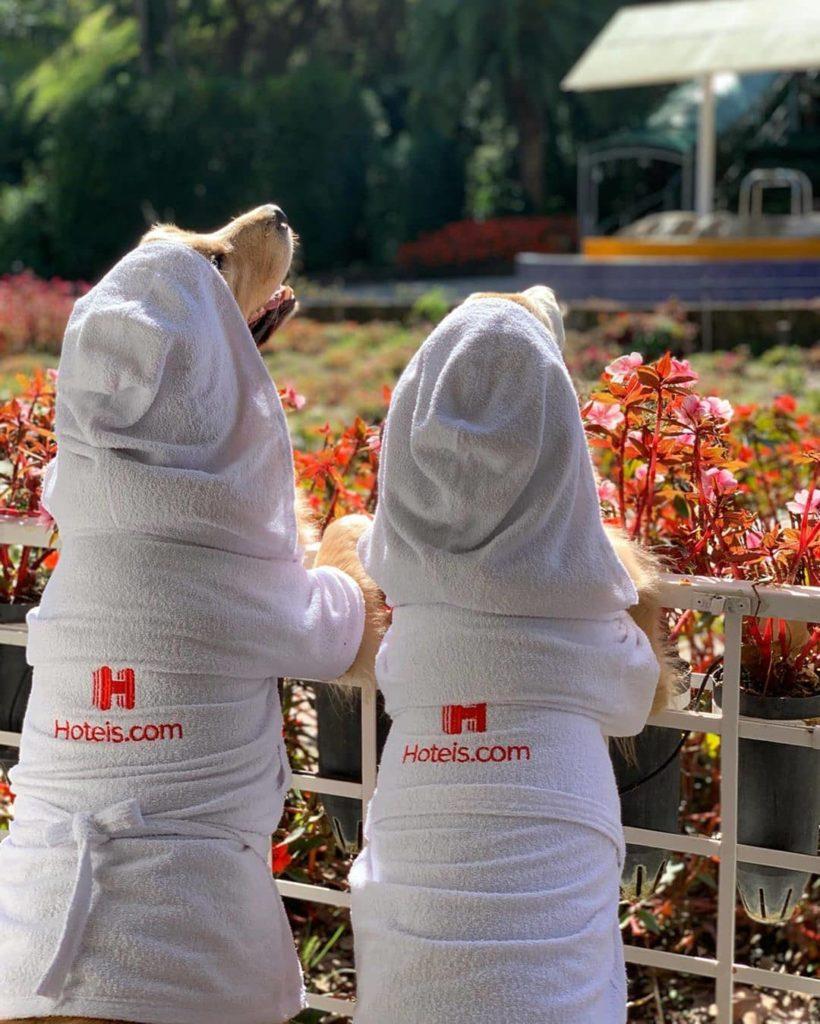 Cachorros de costas, olhando campo de flores, vestindo roupão com a logo Hoteis.com bordada