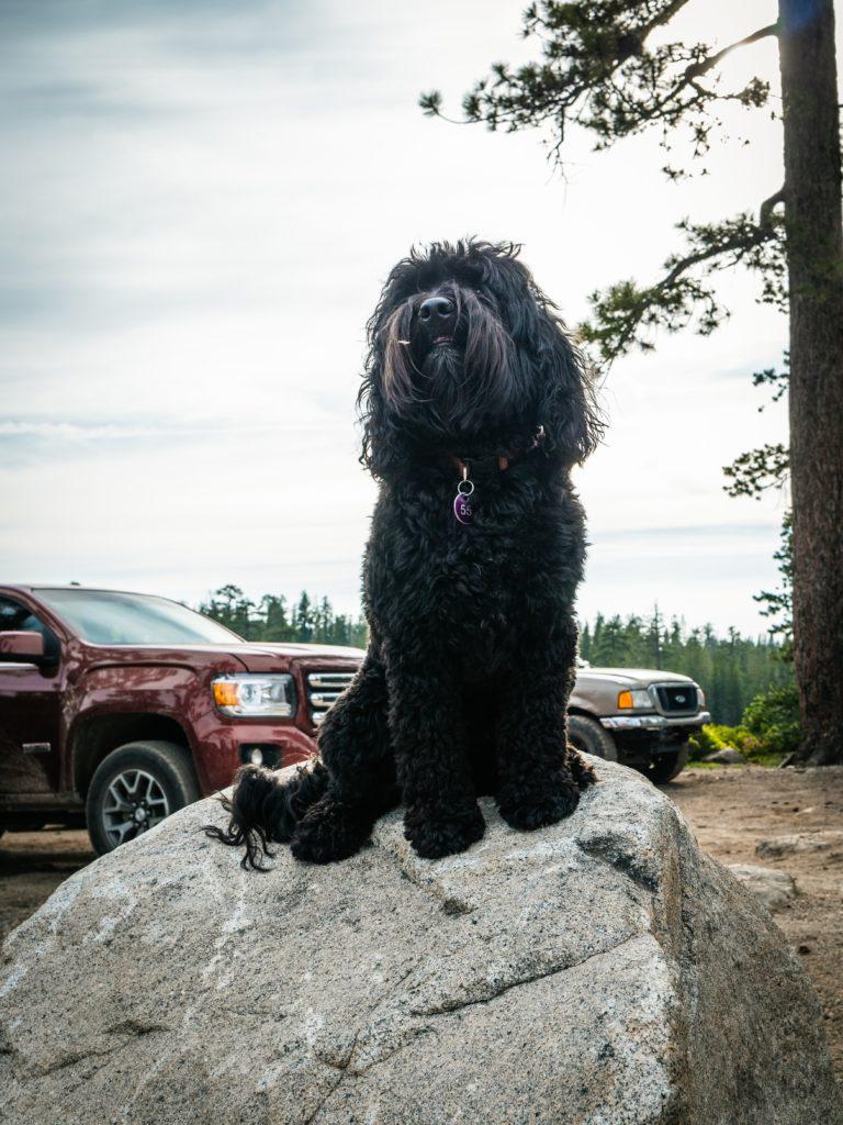 Foto de cachorrinho em cima de pedra da região de Lake Tahoe, depois de percorrer uma longa trilha