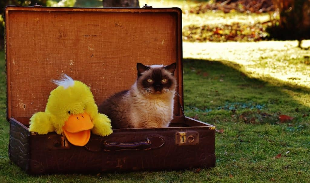 Foto de gato dentro de mala com pato de pelúcia para ilustrar post sobre viagem de avião com animais de estimação