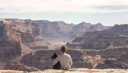 Como viajar de avião com animais de estimação sem estresse