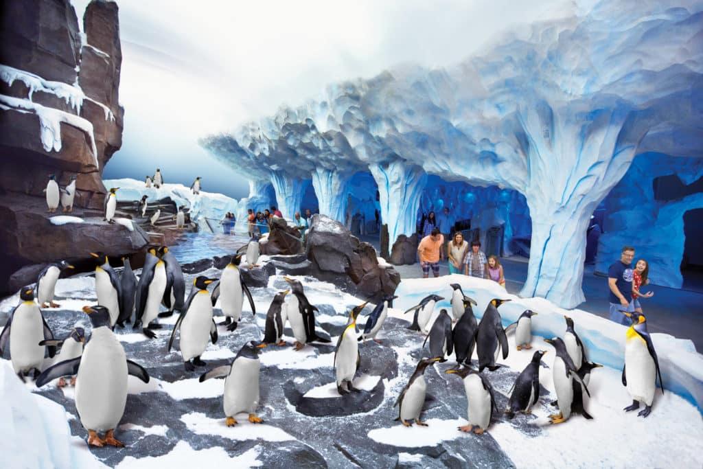 Pinguins em espaço reservado para observação dos participantes da atração Antarctica: Empire of the Penguin