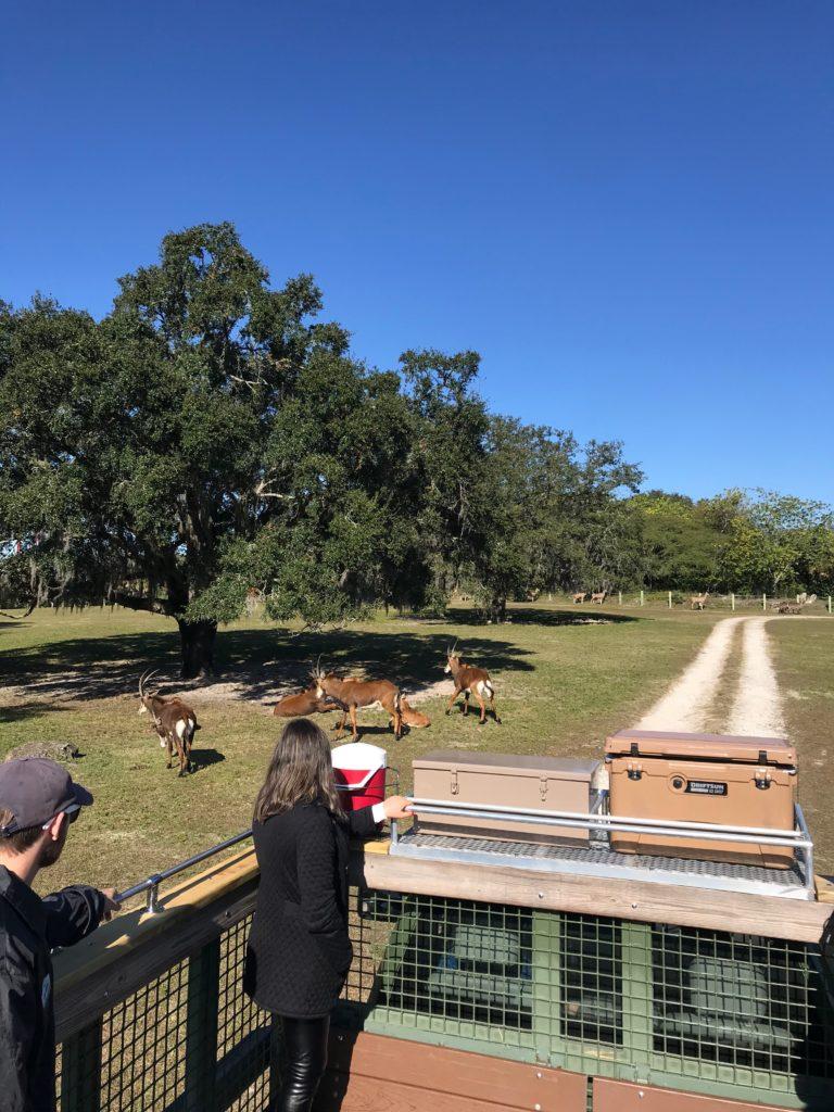 O veículo onde é feito o Serengeti Safari no Busch Garden Tampa