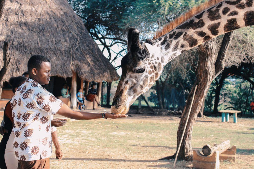 pessoa alimentando uma girafa na Africa do Sul