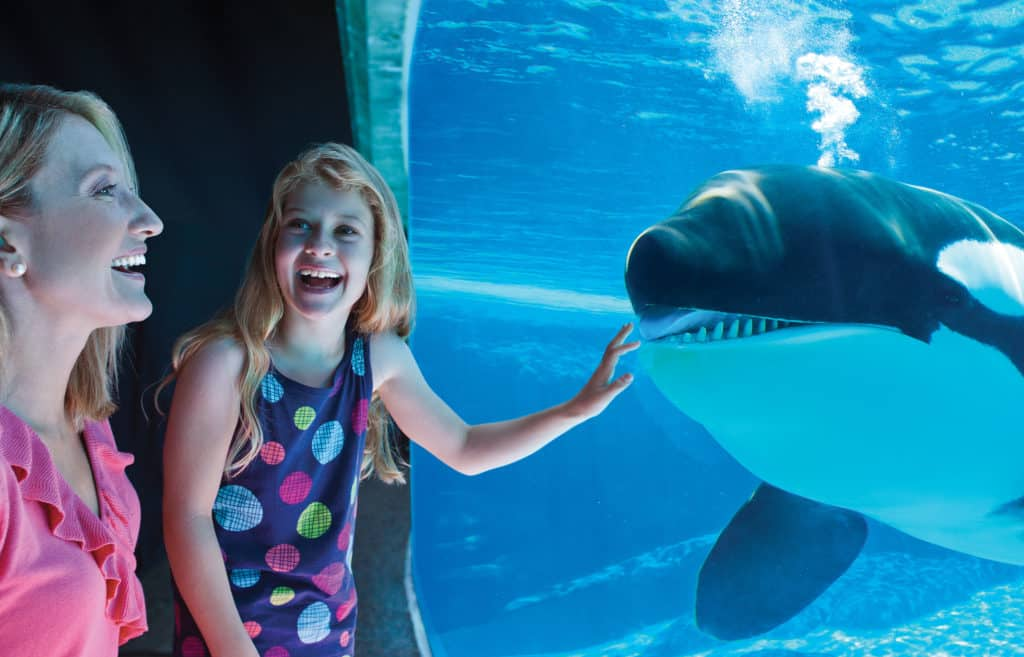 Mulher e menina ao lado de baleia orca na atração Shamu Underwater Viewing