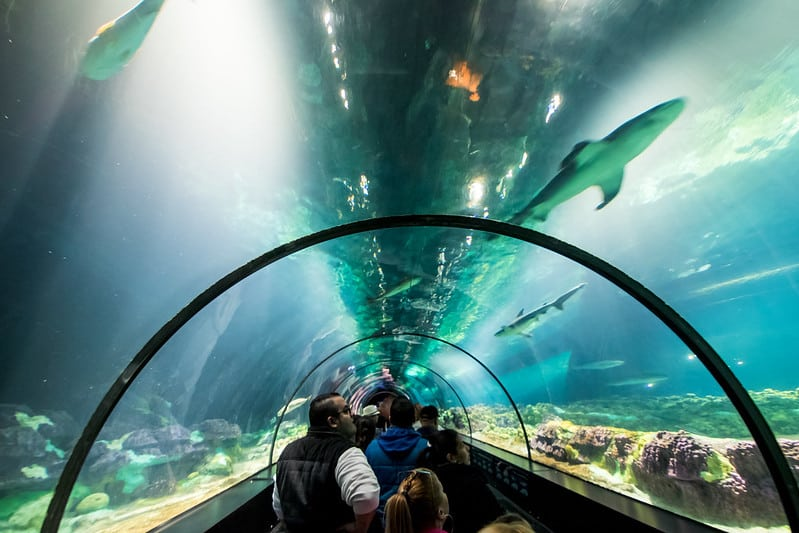Tubo para passagem de pessoas com vista para o aquário de tubarões acima, em atração chamada Shark Encounter